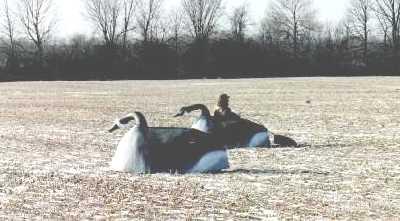 Lock Stock & Barrell - Goose Blind